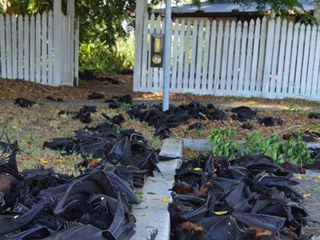 12.  Это фото было сделано во время аномальной жары, которая убила сотни летучих мышей.