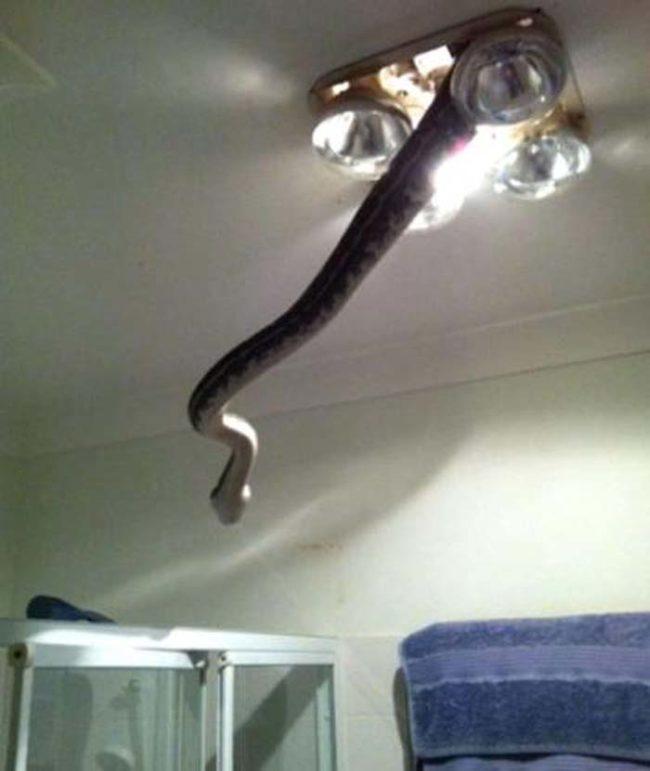 2. Включая светильник, опасайтесь потревожить живущую в нем змею.