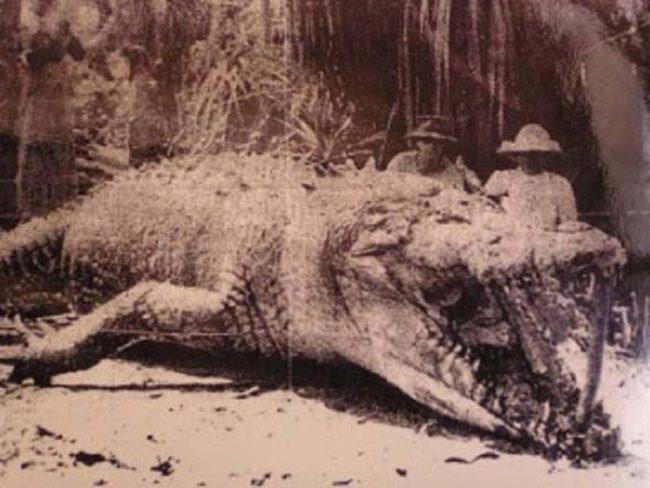 4. Этот 8,5-метровый крокодил был застрелен в Австралии в 1957 году.