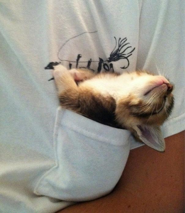 10. Уснувший в кармане.