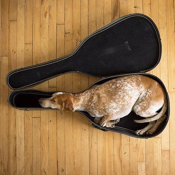3. Это Мэдди. Они любит спать в гитарном футляре.