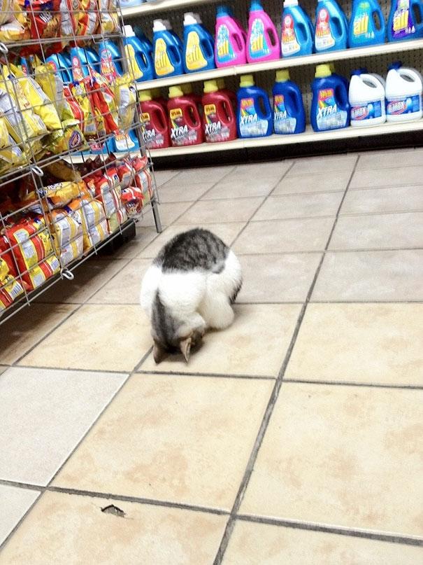 8. Поход по магазинам – это так утомительно. Лучше поспать.