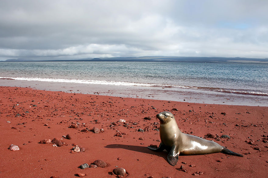 12. Красный песчаный пляж, Рабида, Галапагосские острова.
