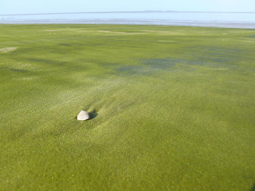 9. Зеленый пляж Папаколеа, Гавайские острова.