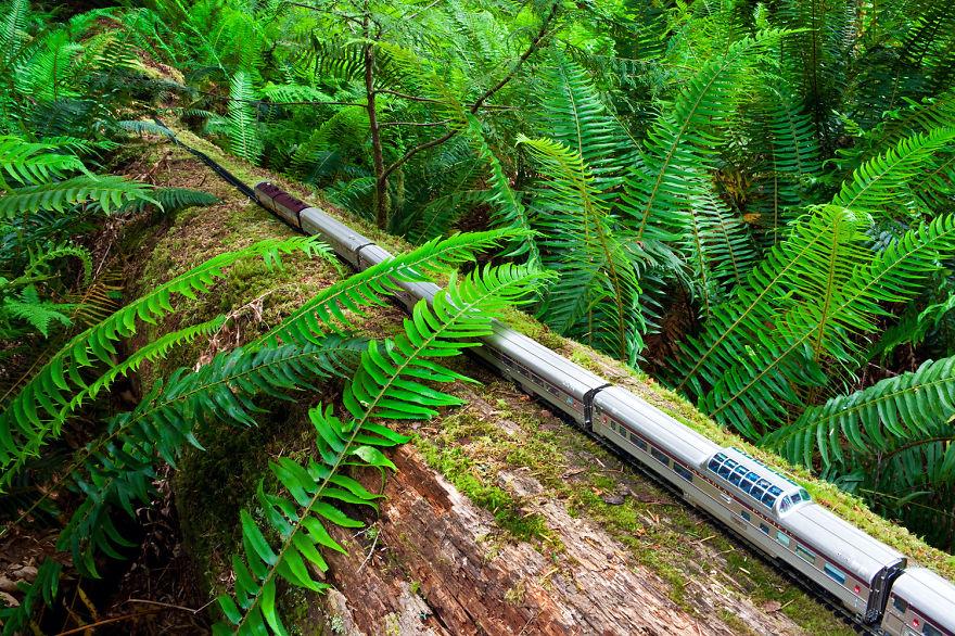 3. Провинциальный парк Макмиллана, Британская Колумбия.