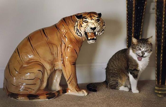 13. Я не кот, я тигр.
