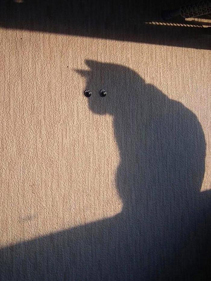 16. Даже у стен есть глаза.