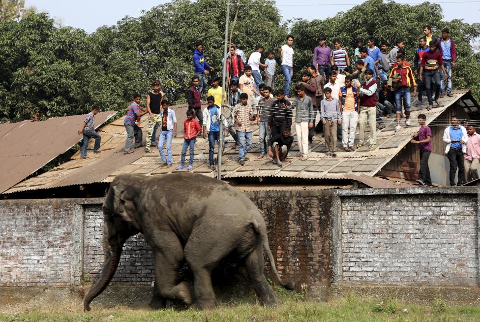 2. Люди в панике забрались на крыши зданий, чтобы не быть растоптанными.