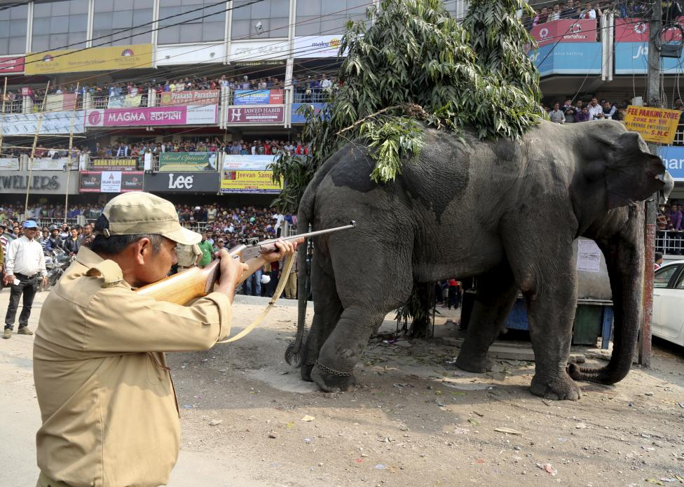 3. Вскоре слона усыпили с помощью транквилизатора.