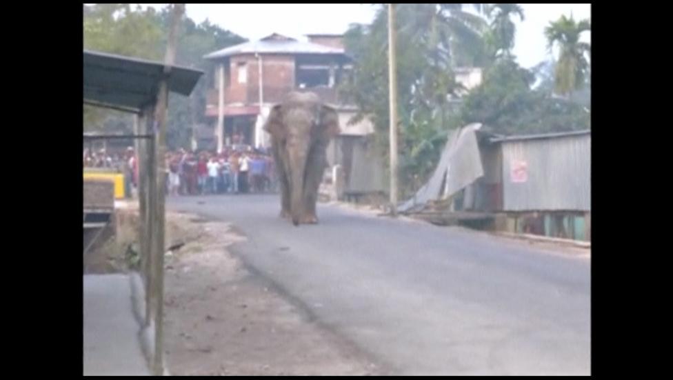 5. Жители города успели снять слона на камеры мобильных телефонов.