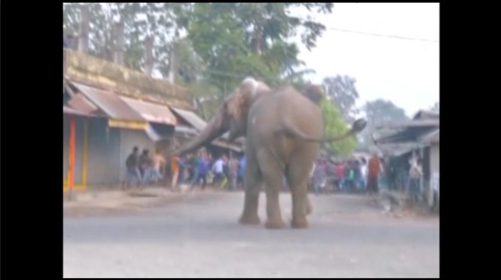 6. Несчастное животное было напугано не меньше, чем местные жители.