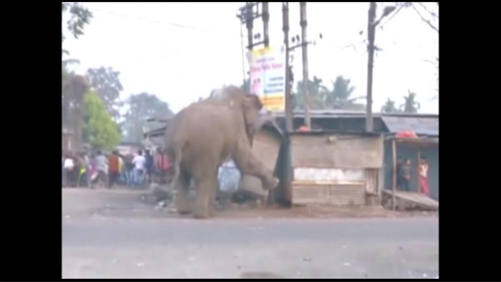 8. Но к счастью для слона и для жителей Силигури все закончилось благополучно. Никто не пострадал.