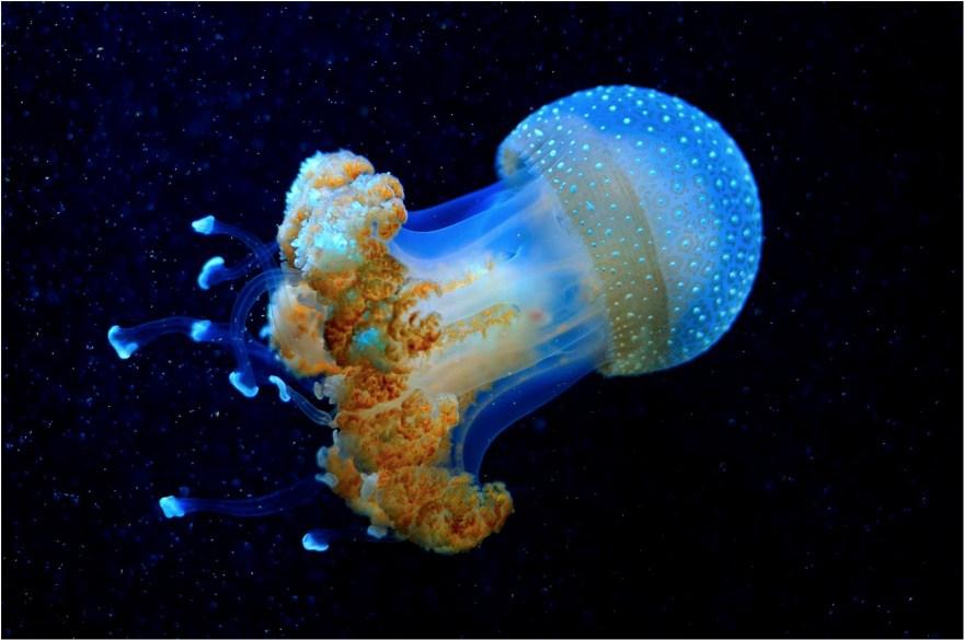 10. Глубоководная медуза выглядит как пришелец из других миров.