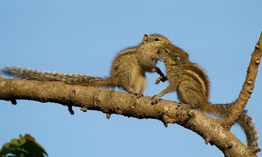 15. Обнимашки на дереве.