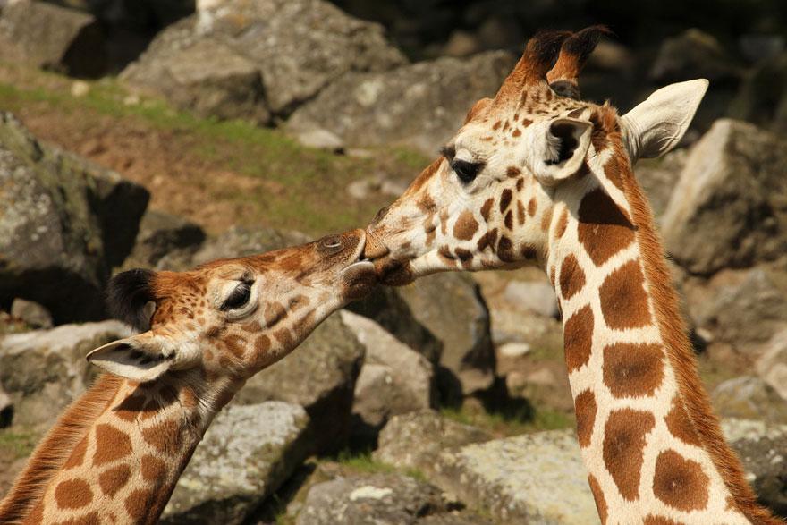 21. Позвольте вас поцеловать.