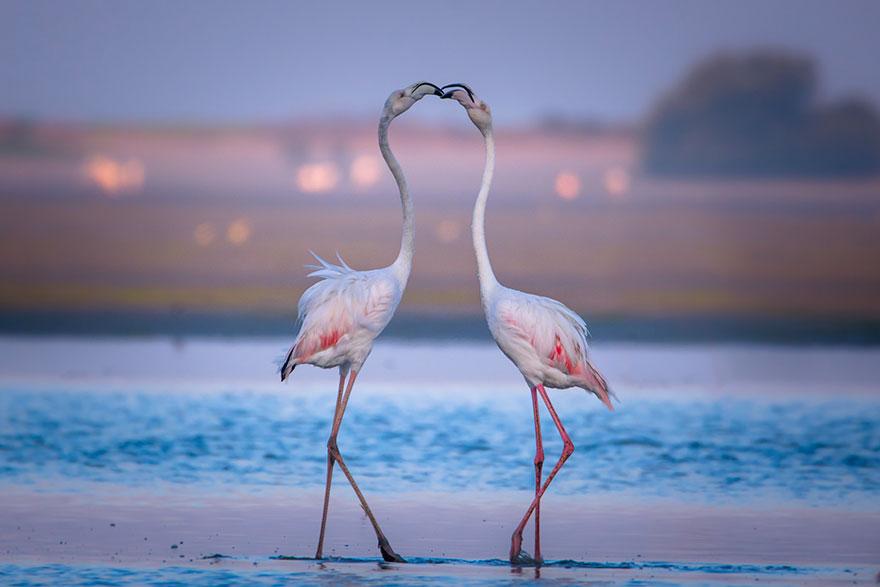 29. Изящный поцелуй фламинго