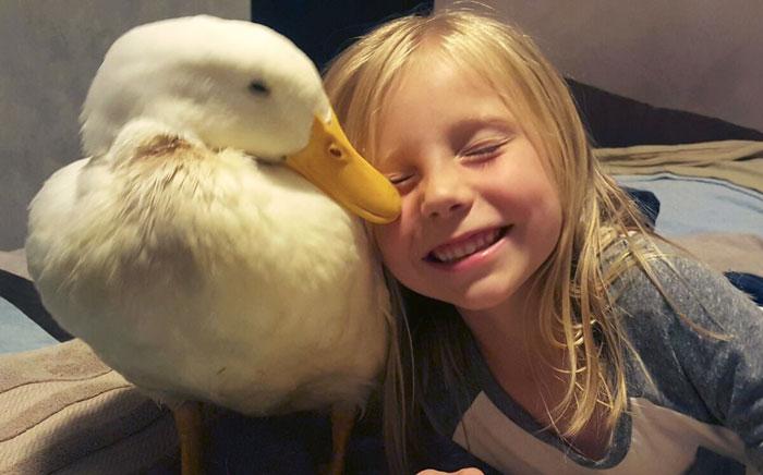 1. Кайли всего 5 лет и она стала мамой для утки.