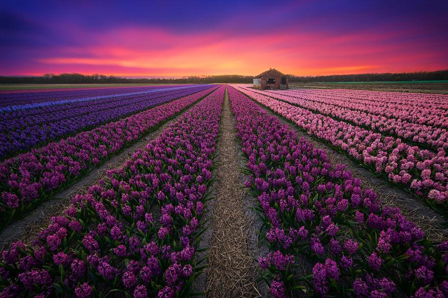 1. Радужный дом. Цветочный сезон в Нидерландах уже не за горами.