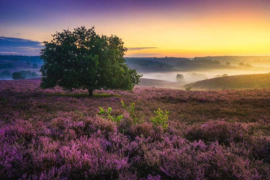 8. Одним из самых красивых мест в Нидерландах. Вересковые поля скоро станут полностью фиолетовыми.
