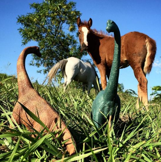 4. Лошади удивлены новым видом животных.