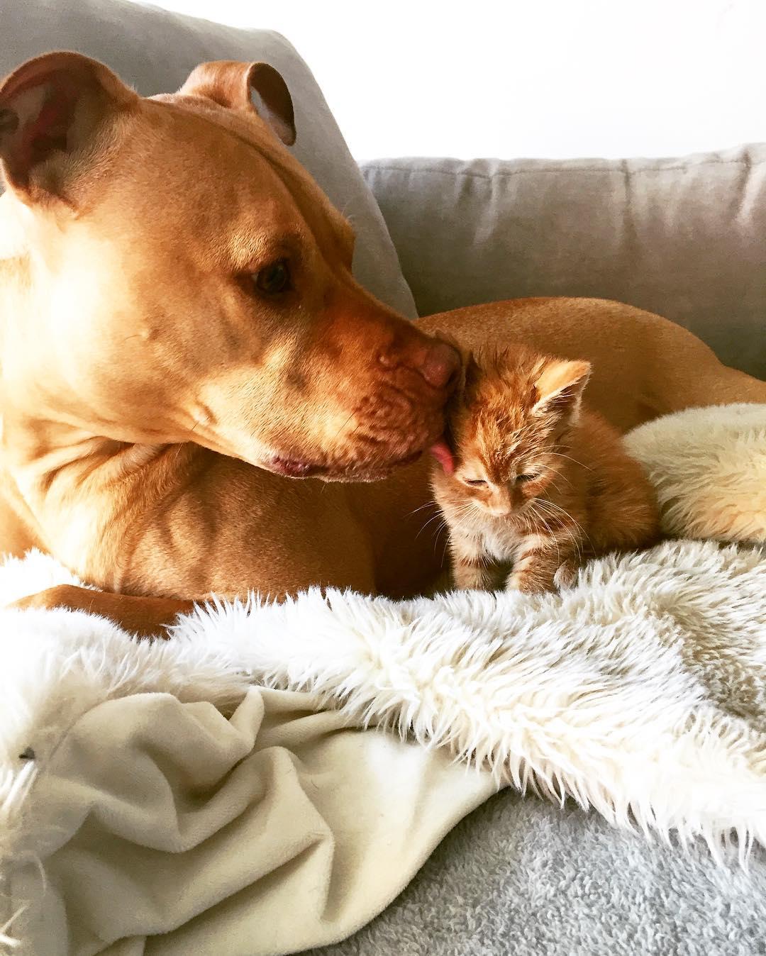 9. «Ру думает, что Бубба – его родная мама, а Бубба очень любит малыша Ру».