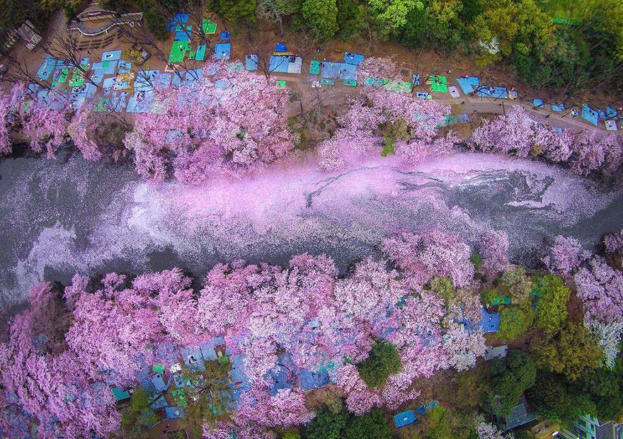 1. Река сакуры.
