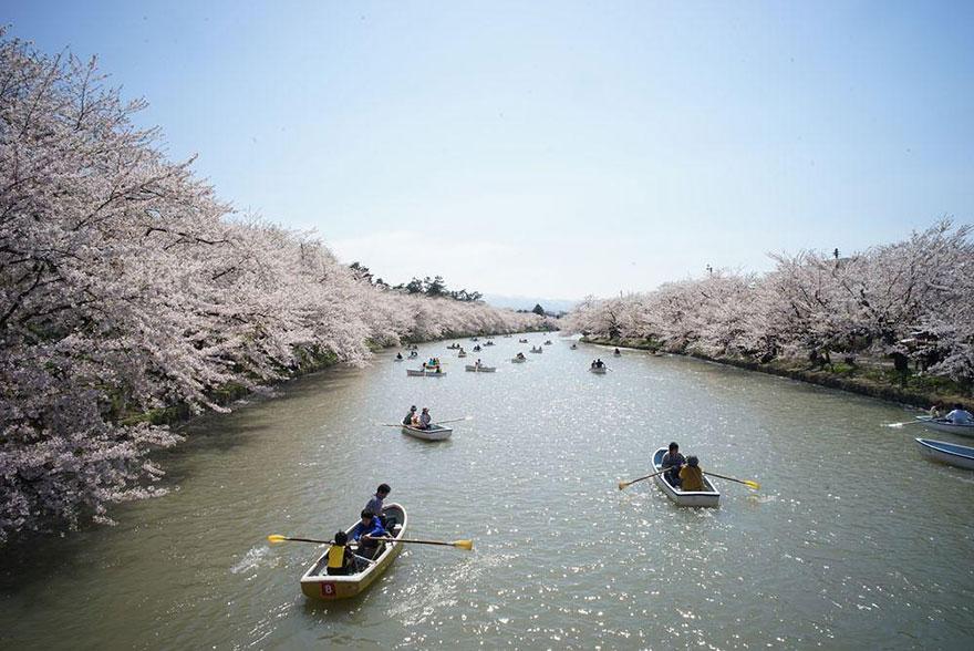 5. Японский фестиваль цветущей вишни.
