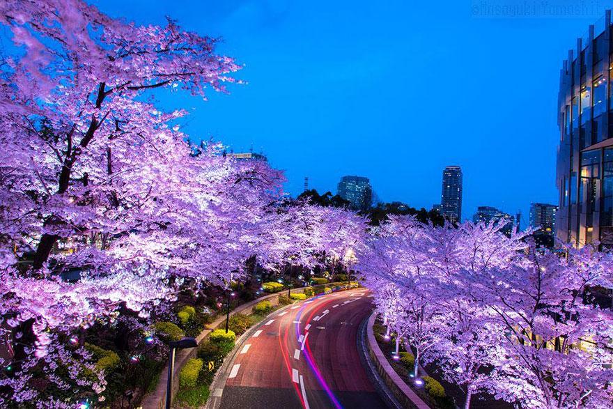 6. Розовая сакура и розовая дорога.