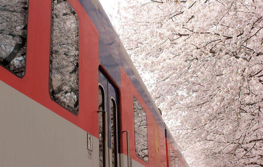 8. Поезд в весну.