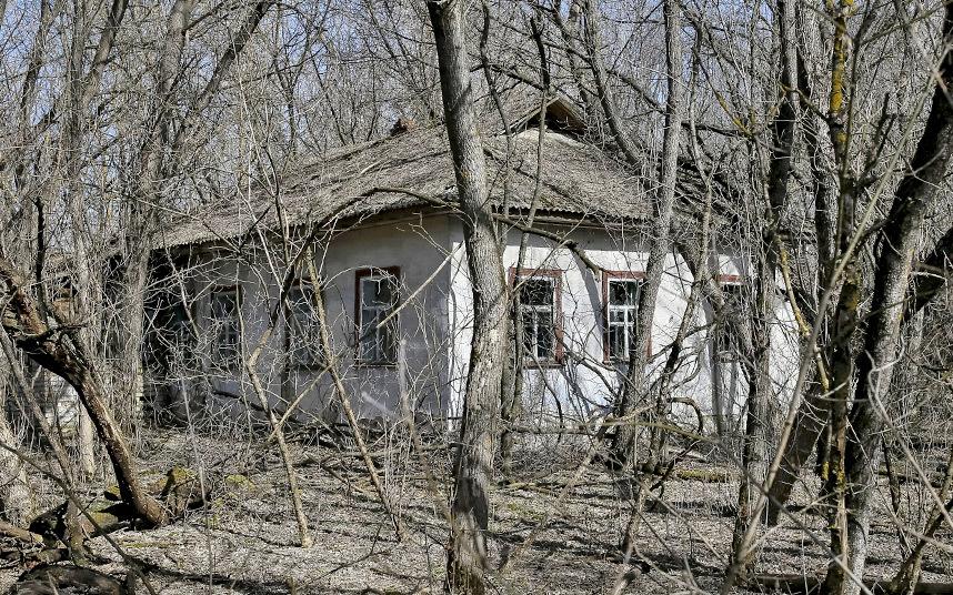 14. Без людей природа берет свое и старые дома окружают деревья, они обрастают травой.