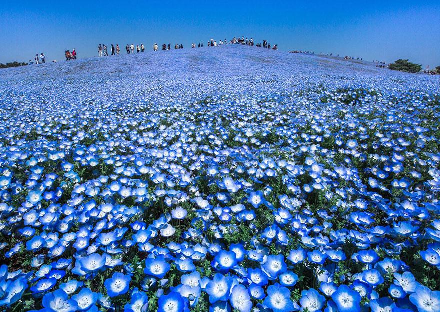 19. «Голубые небеса», Япония.