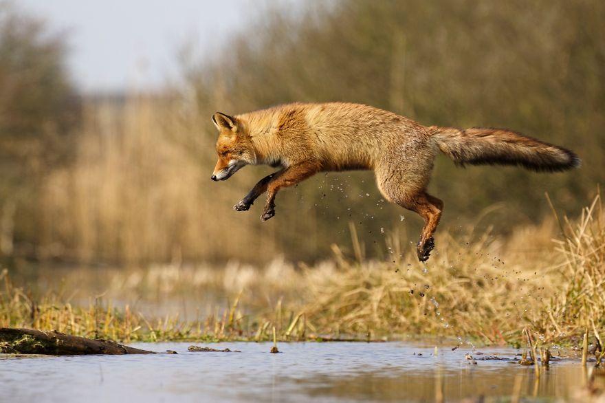 12. Фото в прыжке.