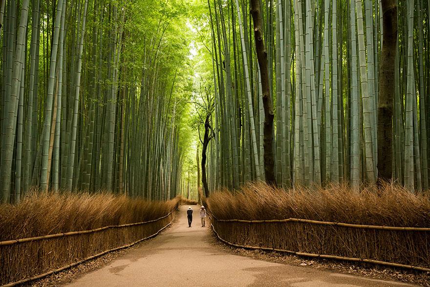 1. Бамбуковая роща Сагано, парк Арасияма, Киото.