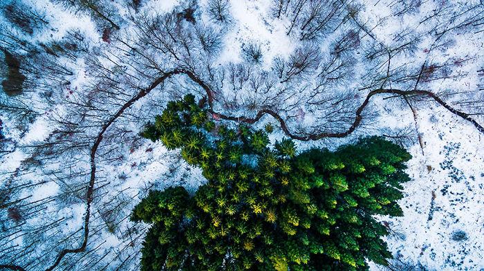 4. Первое место в категории Живая природа. Лес Kalbyris, Дания.