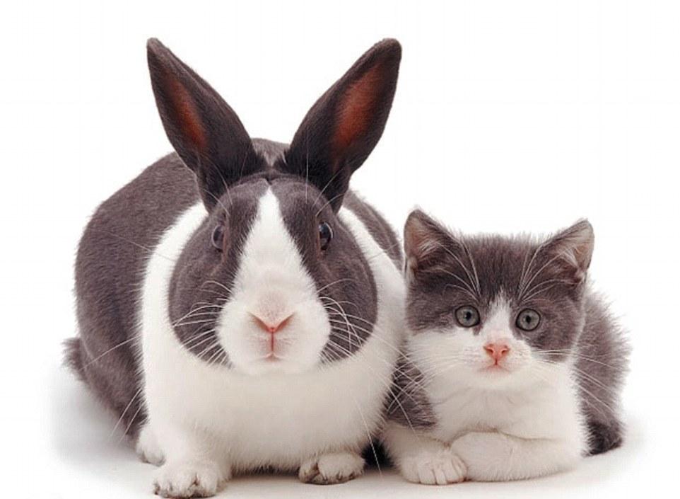 1. Котенок и кролик похоже всем, даже усами.