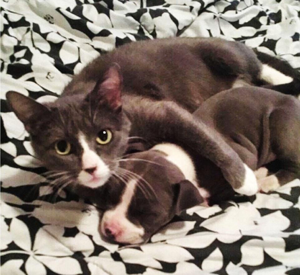 12. Этот кот защищает свою маленькую сонную копию.