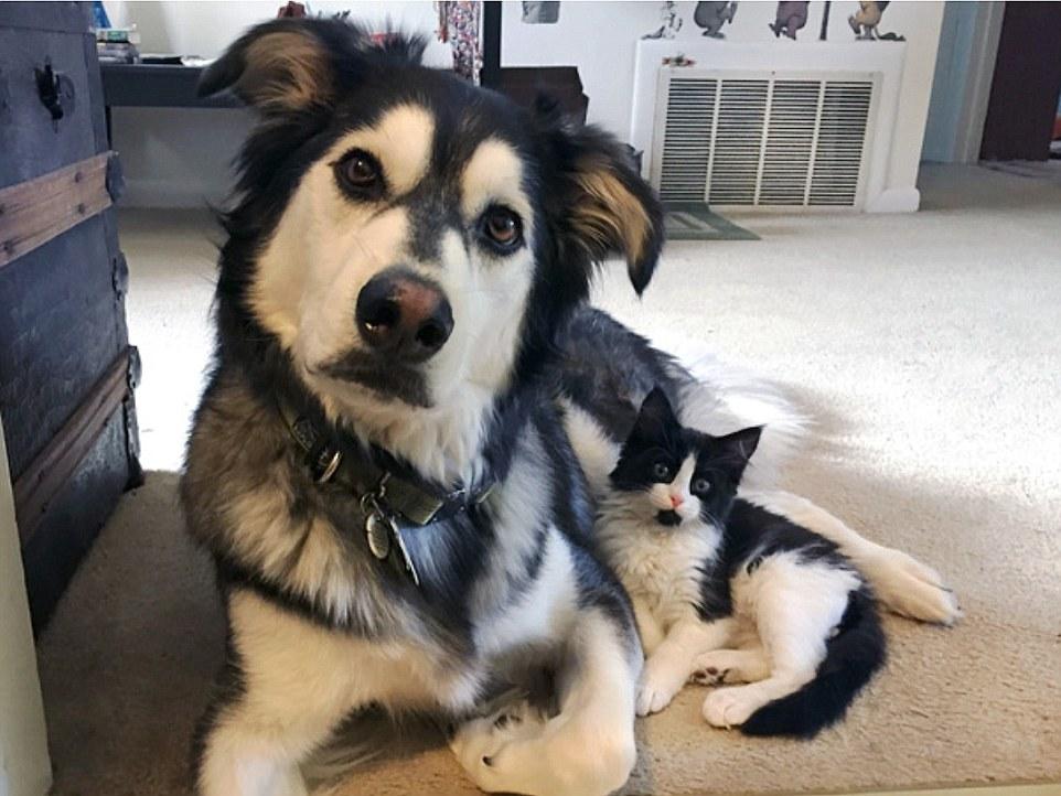 5. Коты с собаками могут быть не только похоже, но и стать лучшими друзьями им по силам.