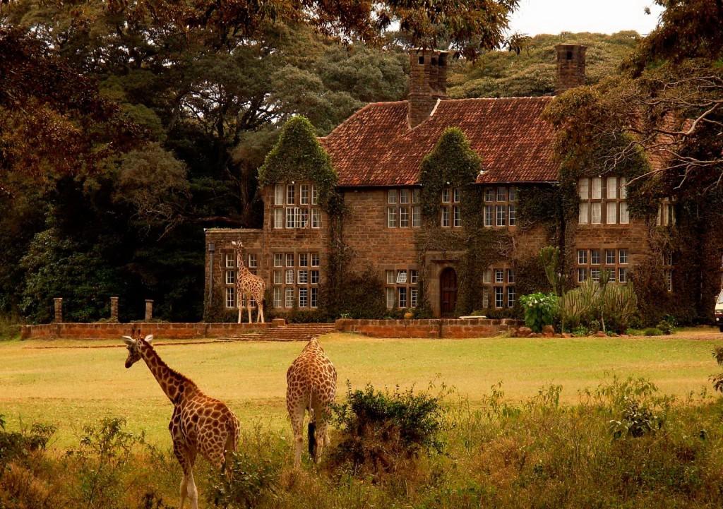 3. Отель служит временным домом постояльцам и постоянным домом для редкого вида жирафов Ротшильда.