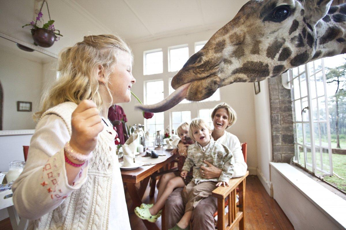 7. Жирафы очень дружелюбны, несмотря на их гигантский рост. Они обожают гостей и порой любят пообедать или позавтракать вместе с ними.