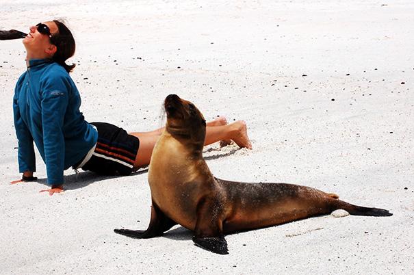 5. Йога с морским львом.