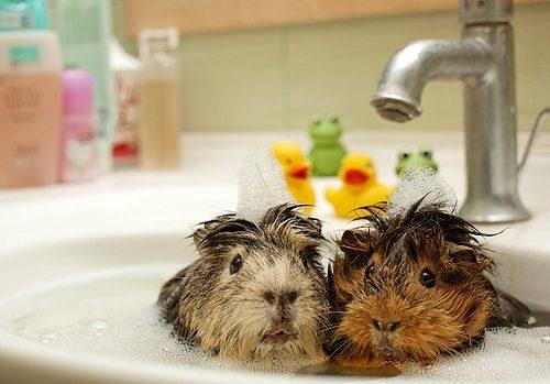 5. Эти двое явно не ожидали водных процедур.