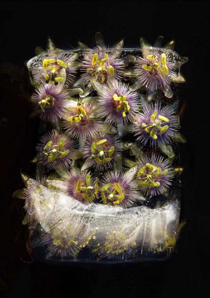 Натюрморты из замерзших цветов