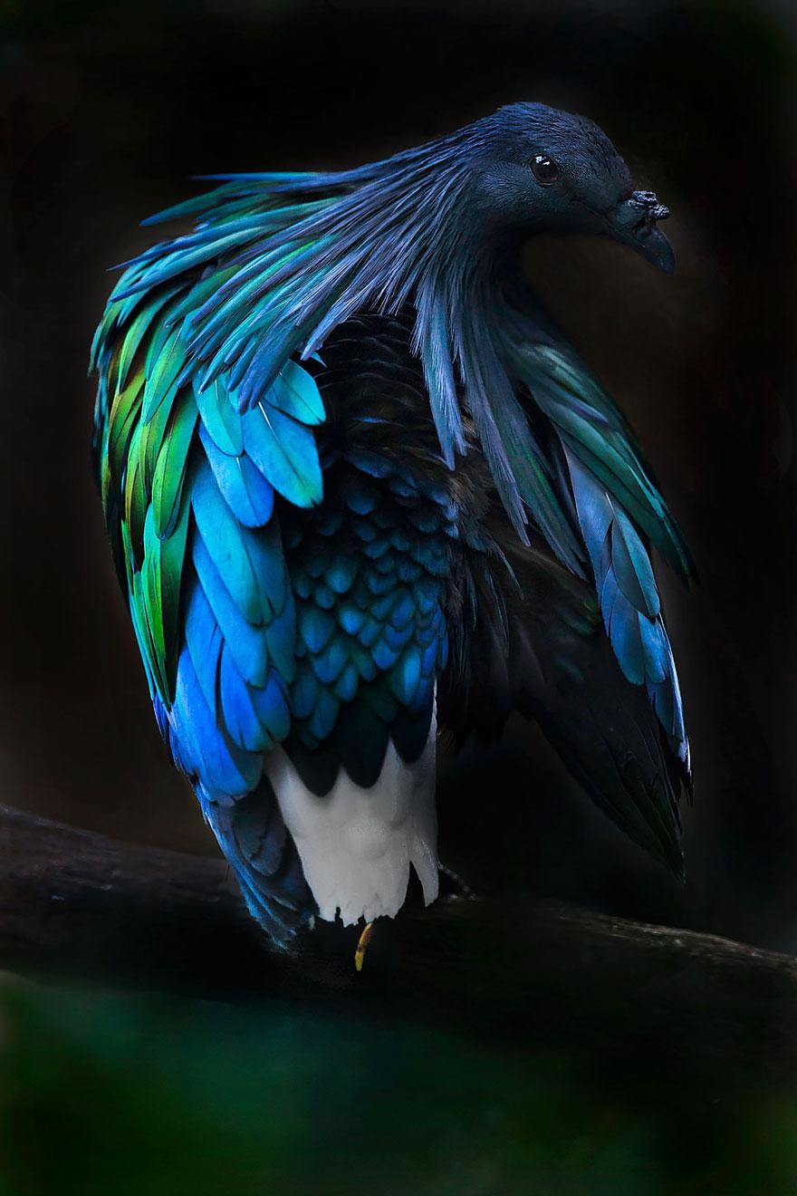 5. Длина тела голуба – около 40 см.