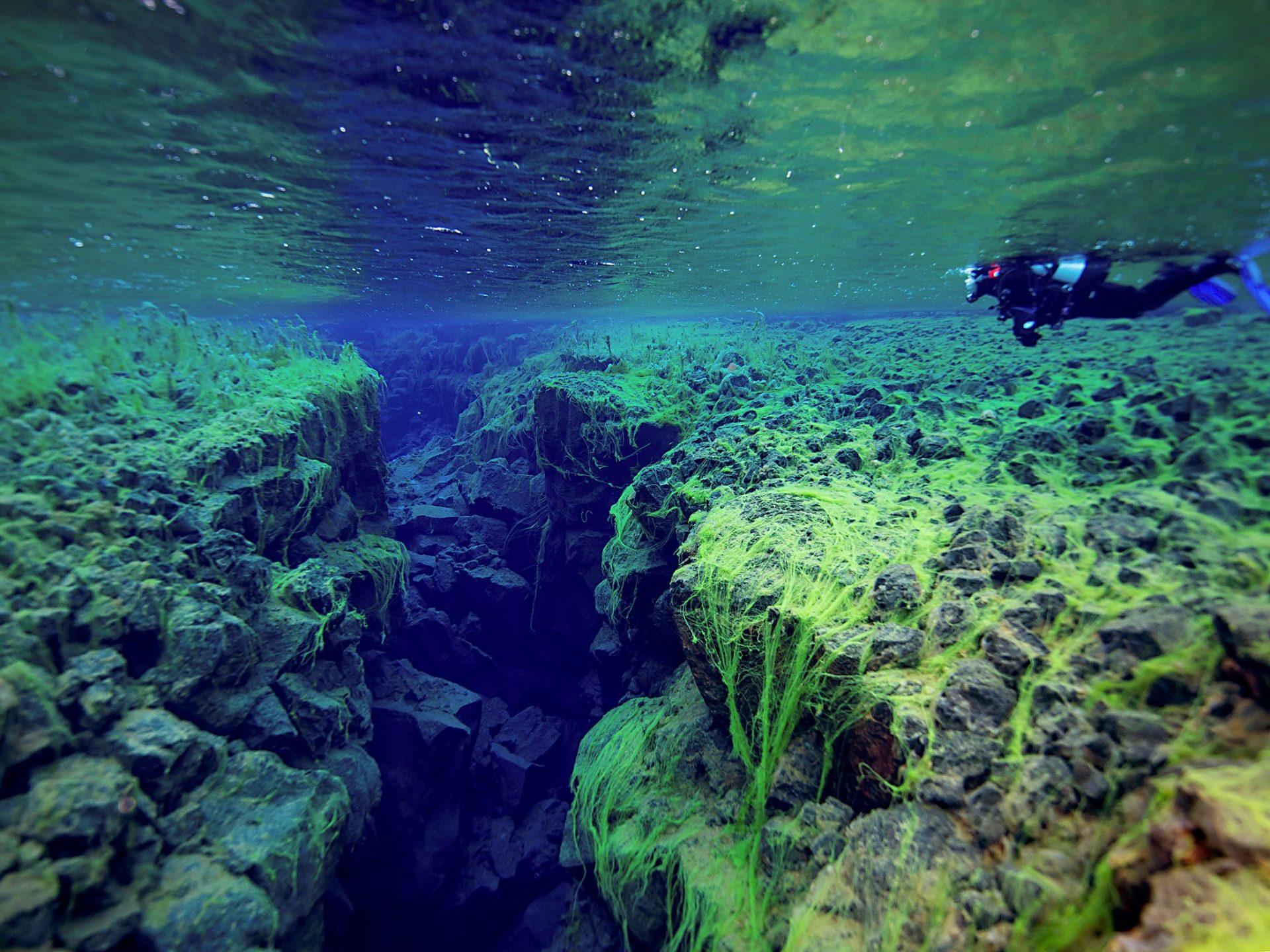 10. Подводное ущелье Сифра, Исландия.