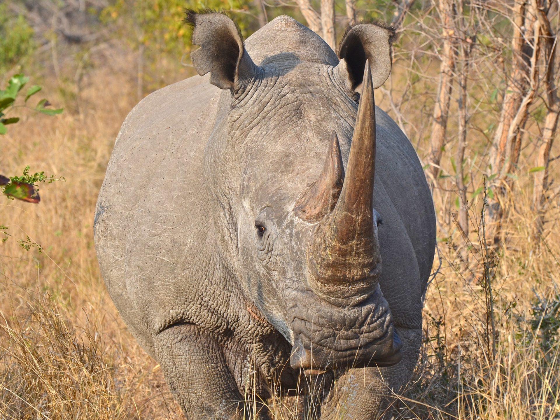 8. Черные и белые носороги - Южная Африка.