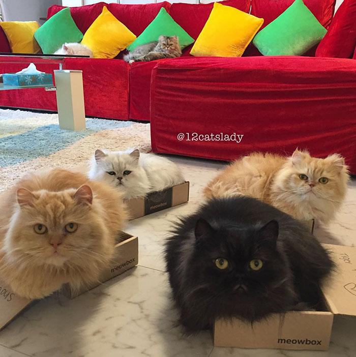 11. Сейчас всех котов стерилизовали и кастрировали.
