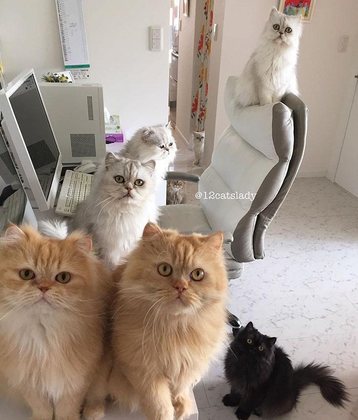 13. Обратите внимание, что все кошки смотрят прямо в камеру.