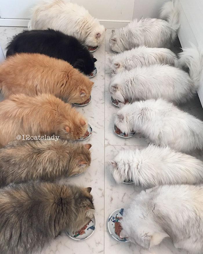3. Дело в том, что у женщины живут 12 персидских кошек.