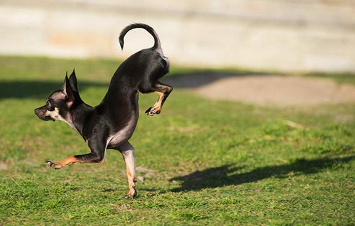 3. Самый быстрый пятиметровый забег на передних лапах.