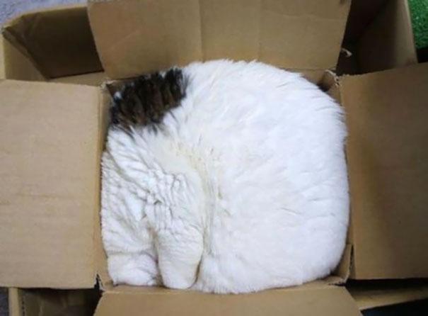 5. Упакованный кот.